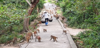 honorable experimental monkeys in reu island