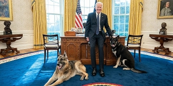 World breaking news today (March 31): Bidens' dog Major involved in another biting incident