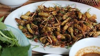 Dried milk cicadas, the taste of Son La