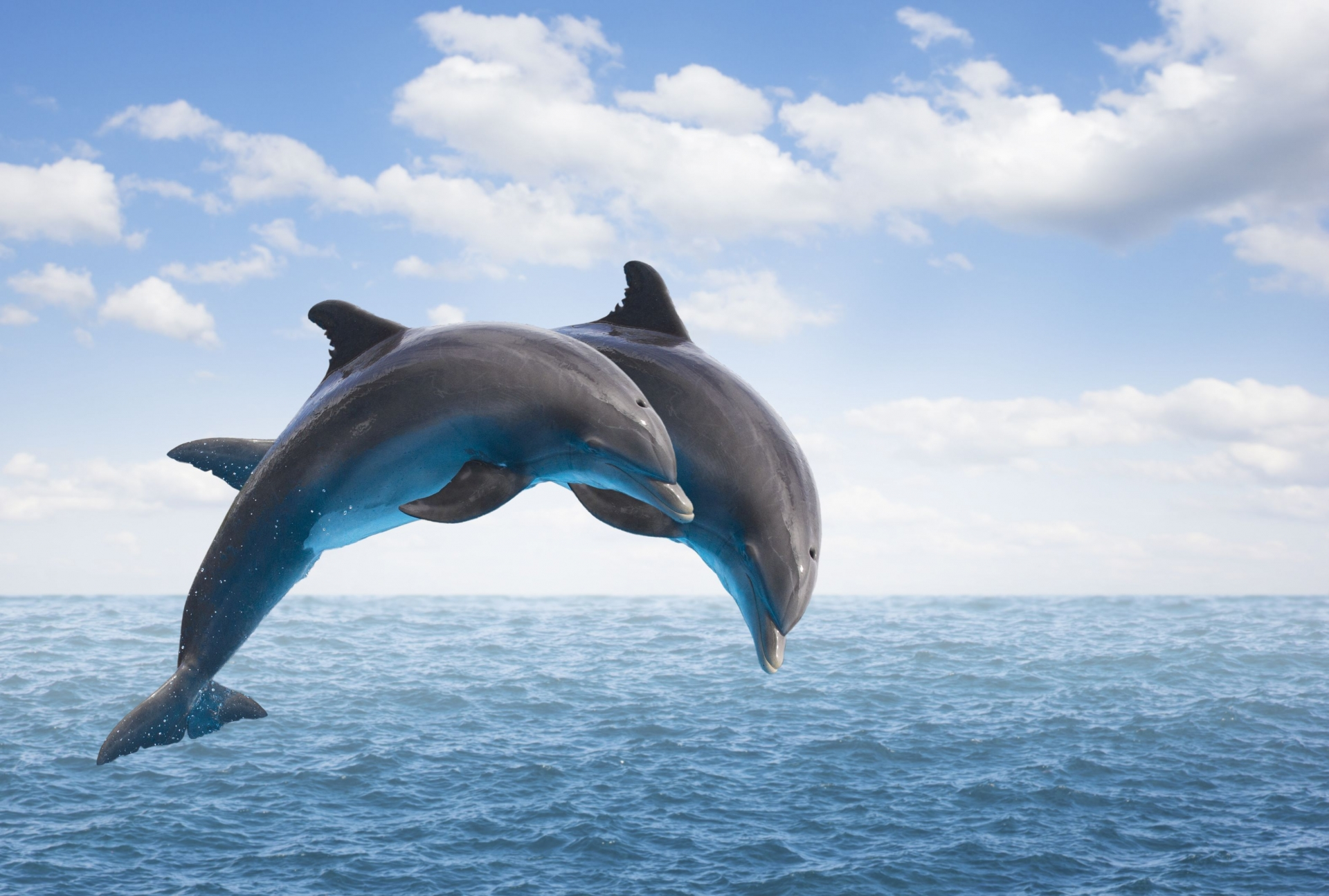 dolphins appearance off central coast sparks excitement
