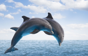 dolphins appearance off central coast of vietnam sparks excitement