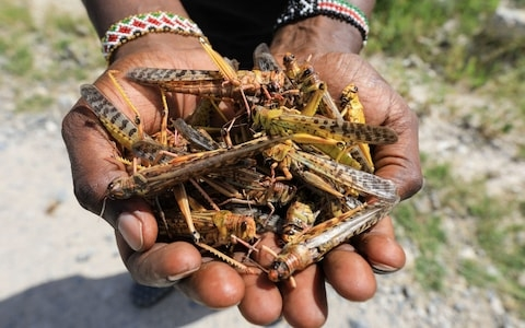 east africa braces for worst locust swarms in 7 decades