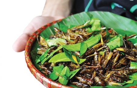Roasted grasshoppers, the alluring crunchiness