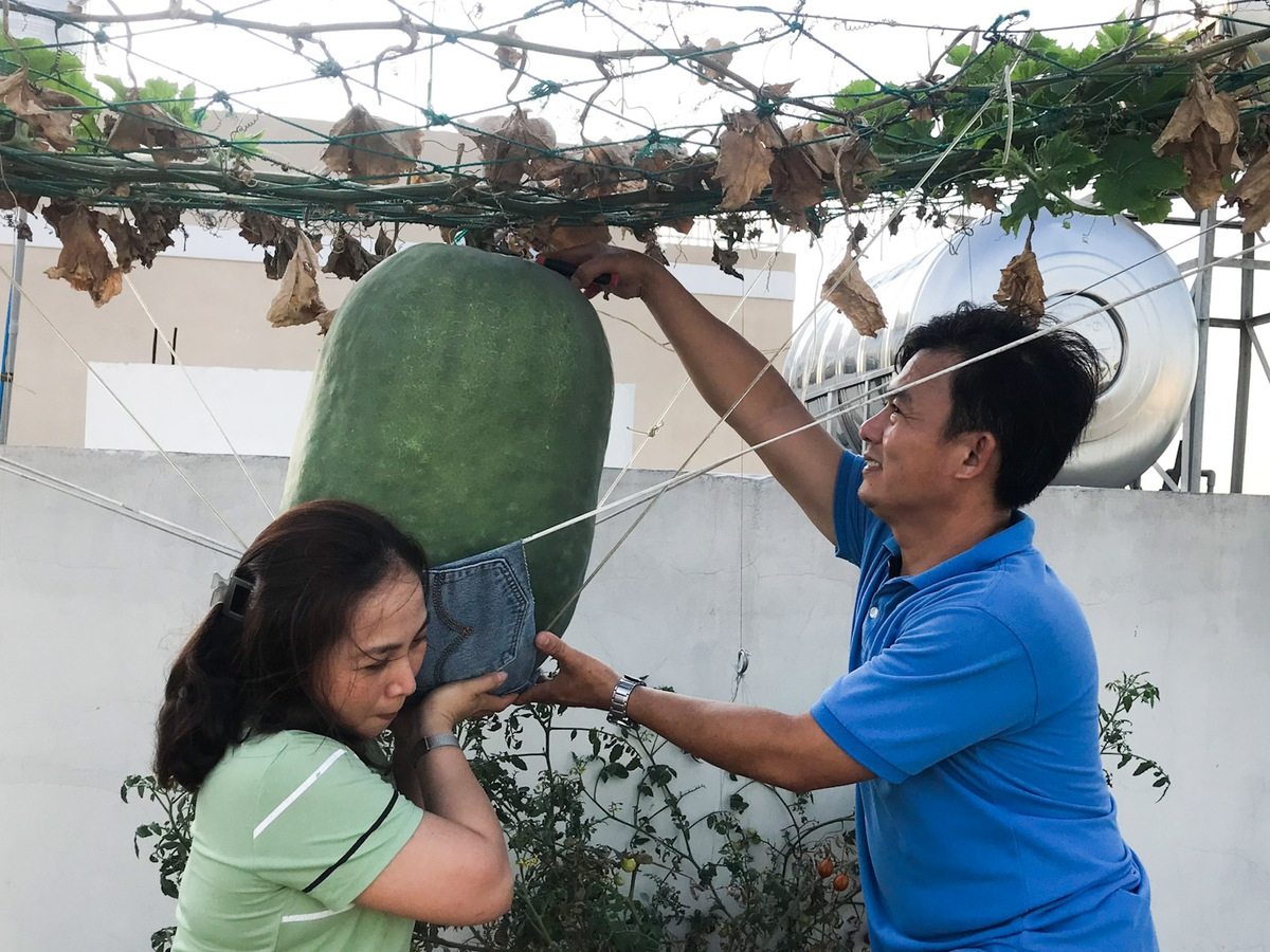 Rooftop garden 'laden' with giant fruits and veggies