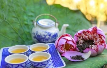 hues lotus tea the fine art in the tea culture