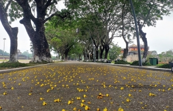 hue draws attentions with summer flower carpets