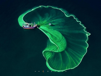 gorgeous anchovy catching scenes in hon yen islet