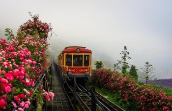 Sapa's rose valley recognised as largest one in Vietnam