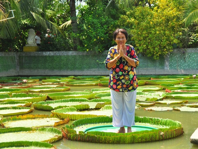 one of a kind giant lotus leaf adult can stand up floating on its surface