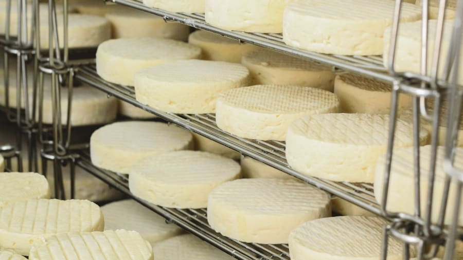cnn dalat produces some of the best cheese in asia