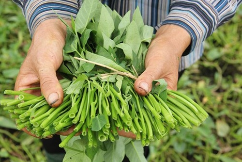 boiled morning glory the quintessence of vietnamese cuisine