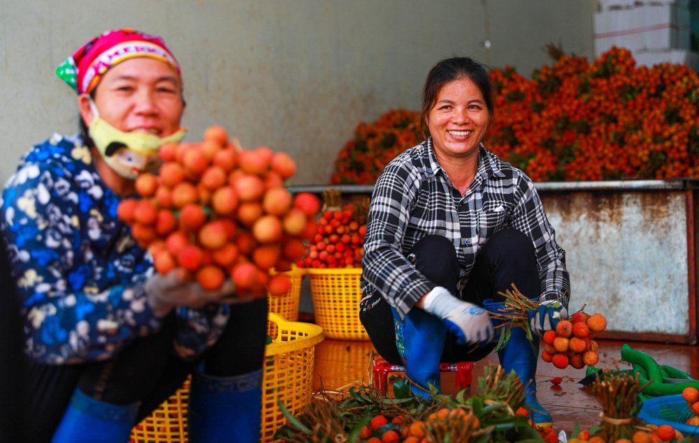 bac giang market painted red with large dots of ripe lychee