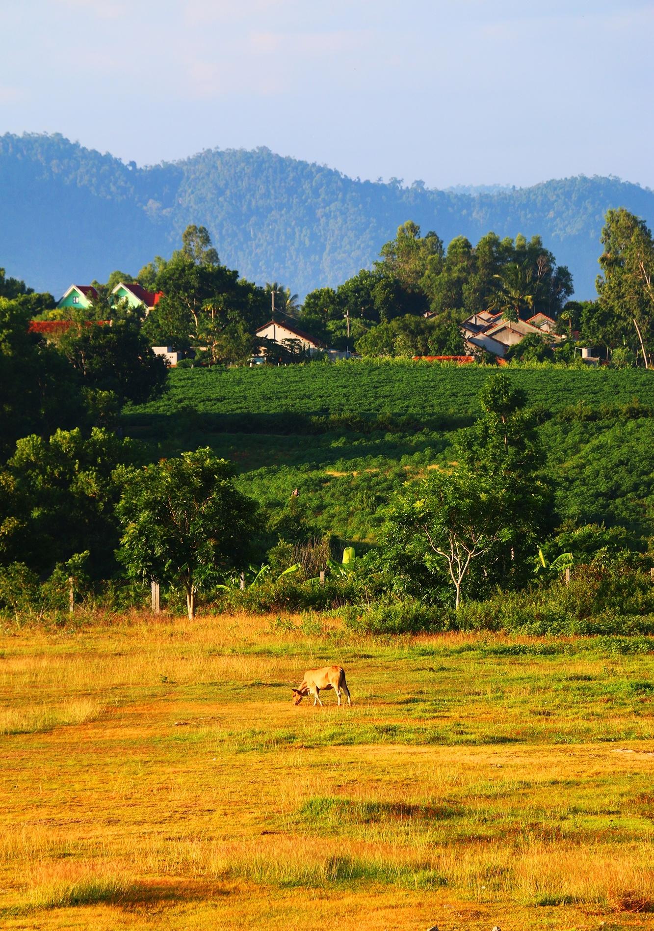 Wake up to the sunshine of Phu Yen