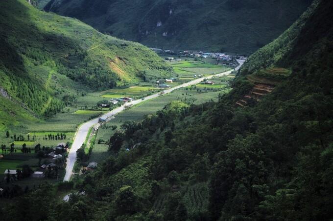 Green corn season on Dong Van rocky plateau