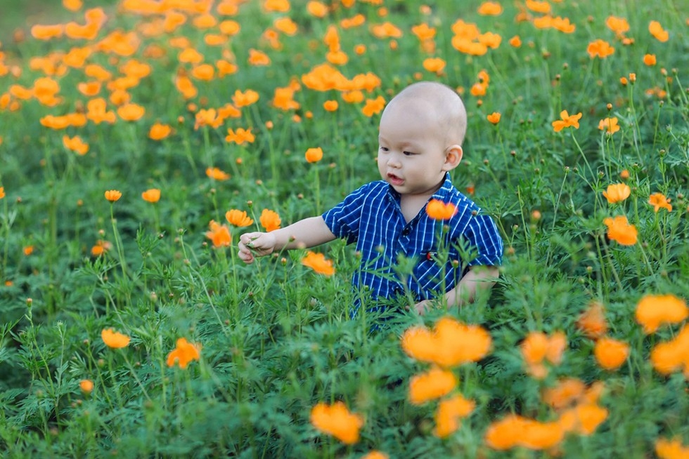get away from daily hustle with pha din flower pass