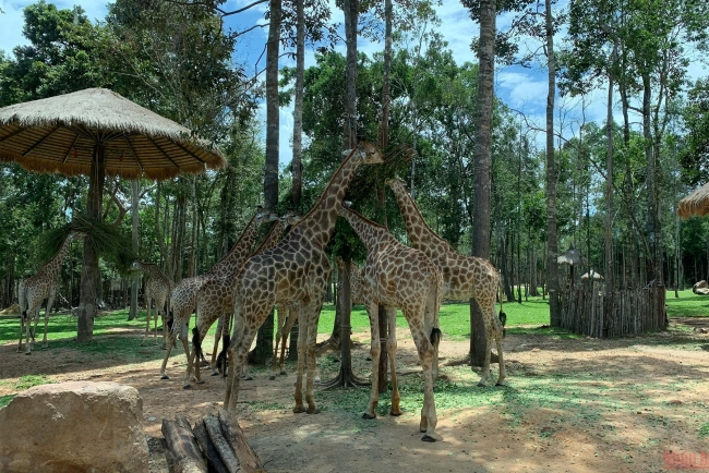 Vinpearl Safari Phu Quoc, a ticket to the wilderness