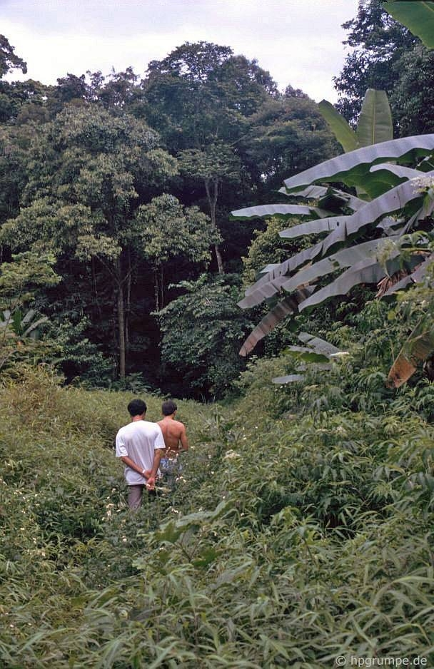 After discovering Cuc Phuong National Park and walking in the forest, Grumpe learnt himself that it'd better to stay alert in the forest as there could be a lot of leeches.