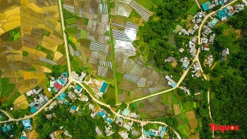 vietnam top destination moc chau rice paddy fields glitters in watery season