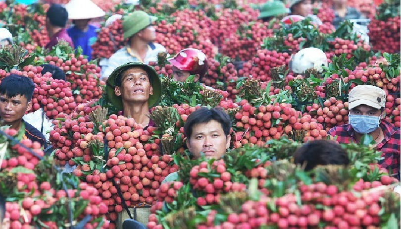 Lychee is among the four mostly-exported fresh fruits in Vietnam.