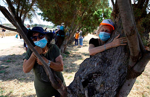 israeli urged to hug trees beat the coronavirus blues