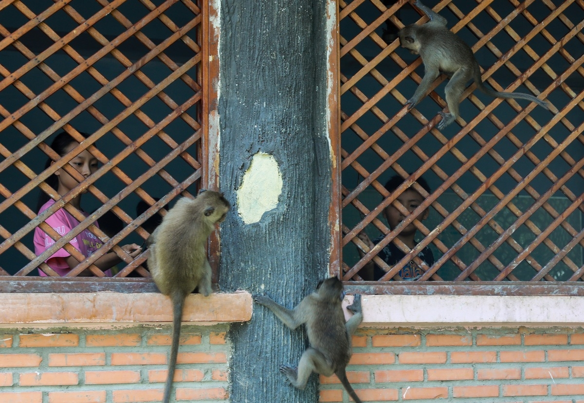 tourist destination flocked with thousands of monkeys