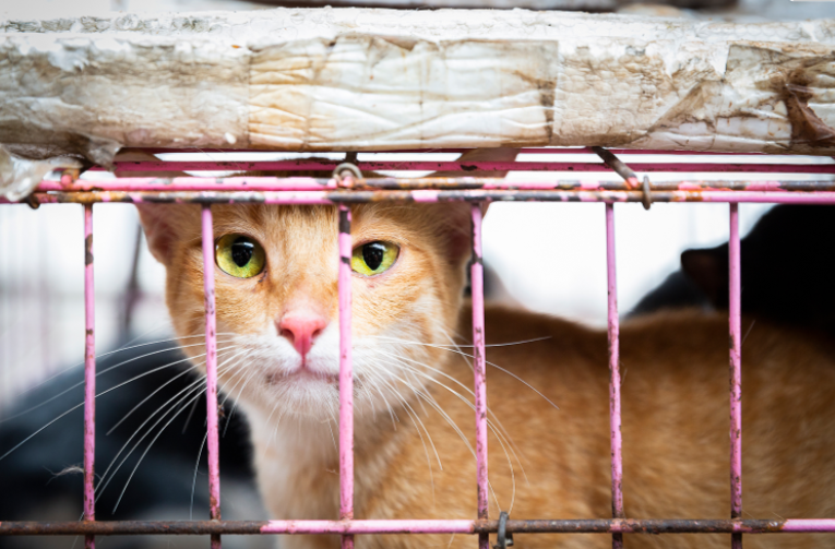 roughly 1 million cats served for meat trade in vietnam
