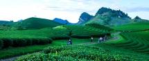 moc chau plateau magnificent picture of nature