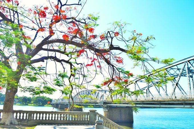 The charming grace of Truong Tien Bridge in Hue