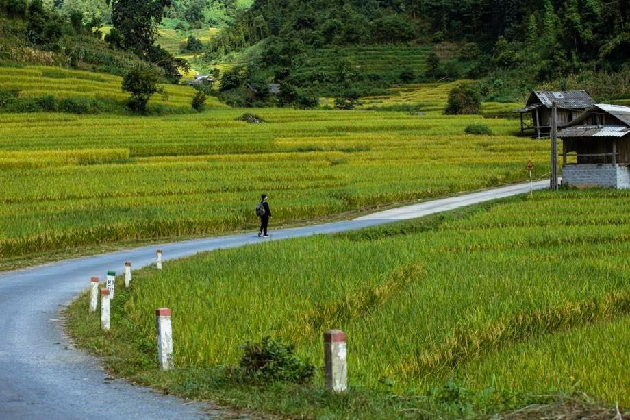 A Quiet Sapa in Ripening Rice Season