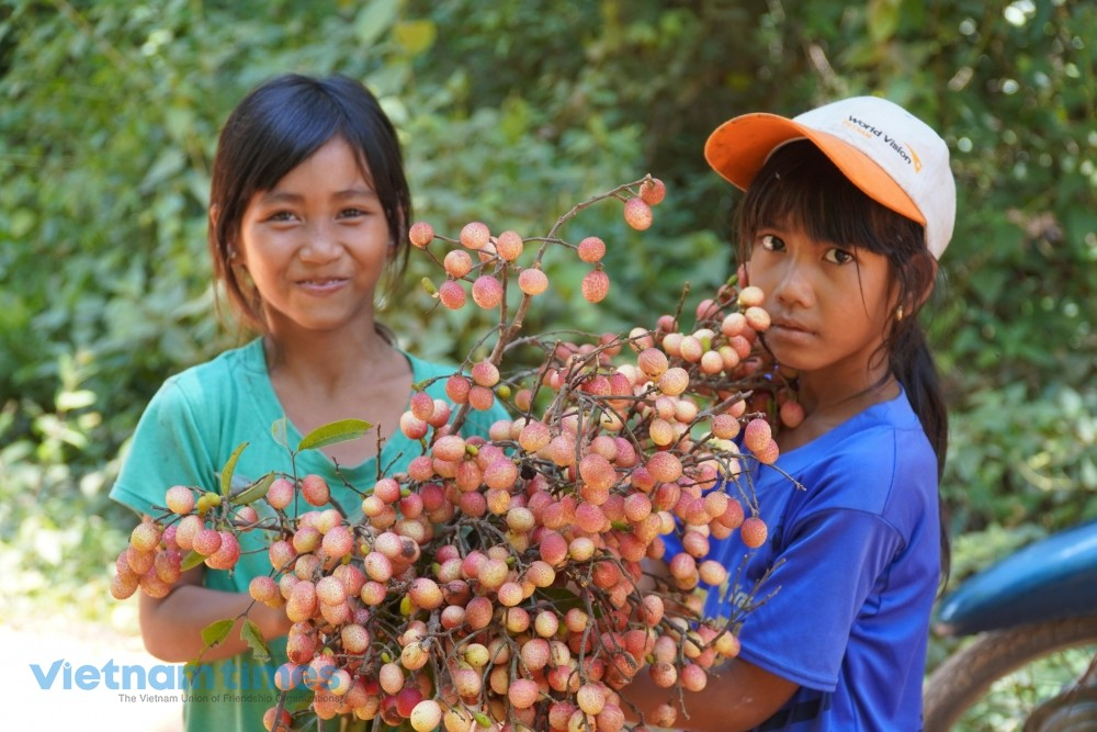 Forest Lychee, the 'Gift from Heaven' of Highland Children