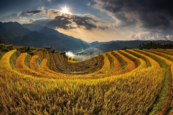 7 ideal choices for admiring ripening rice fields in northern vietnam