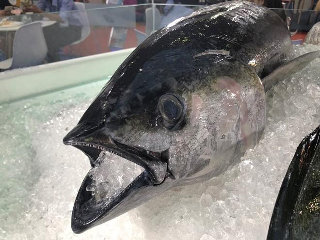 vietnams tuna exports to eu skyrocket thanks to free trade agreement