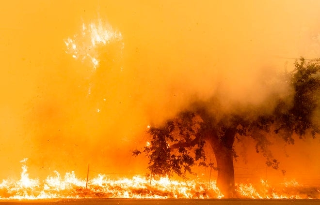 Flames and smoke overtake a tree as the LNU Lightning Complex fire continues to spread in Fairfield, California on Aug. 19, 2020.
