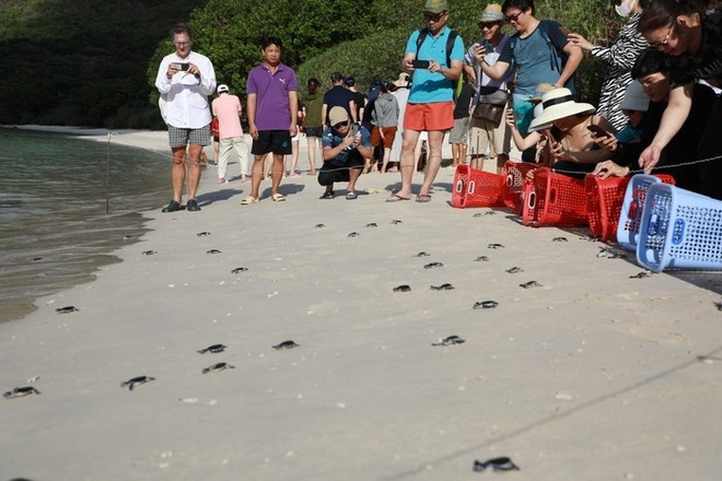A lot of people come to witness the baby turtle crawling to the sea (Photo: Thanh Nien)