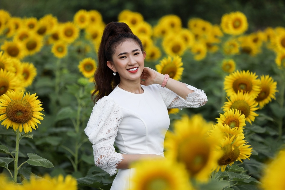 Stunning sunflower garden in the suburb of Ho Chi Minh city