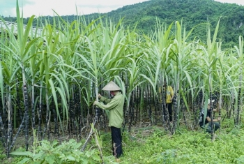 vietnam initiates anti dumping investigation on sugar imported from thailand