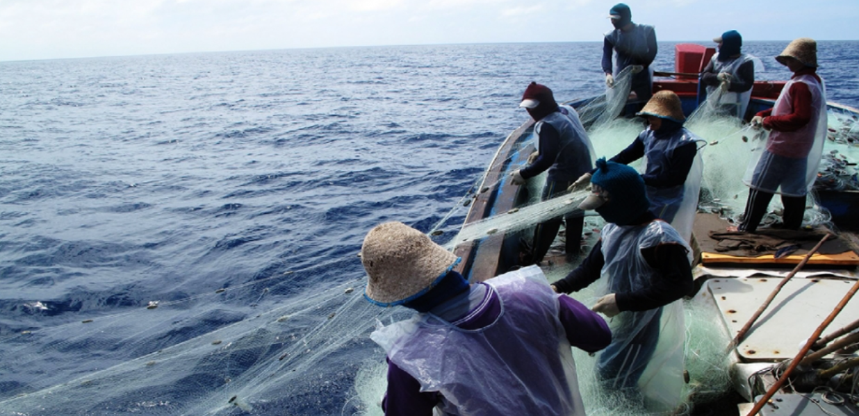 net fishing flying fish on the sea