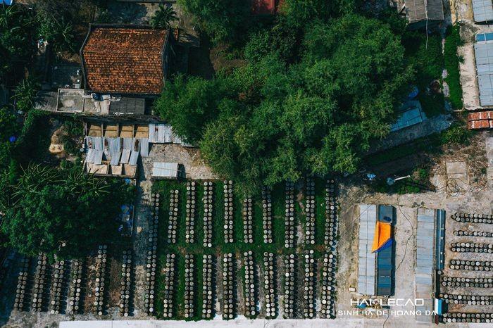 Rare Peaceful Scenes in Hai Phong City Amid Social Distancing