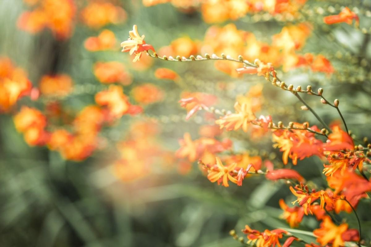 Brilliant Blooming Flowers Near Fansipan Peak