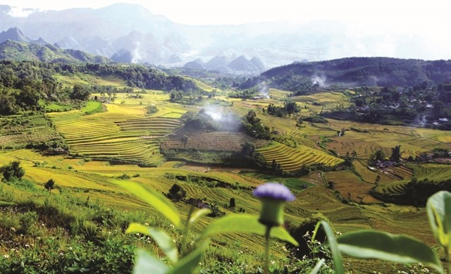 The Allure of Golden Terraces in Ta Leng