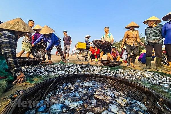 Off-the-beaten-track fishing village in Sam Son Beach