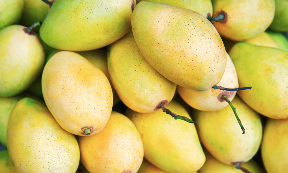 Mango is Vietnam's sixth fresh fruit licensed to be exported to the U.S. after dragon fruit, rambutan, longan, lychee, and star apple (Photo: VNE)