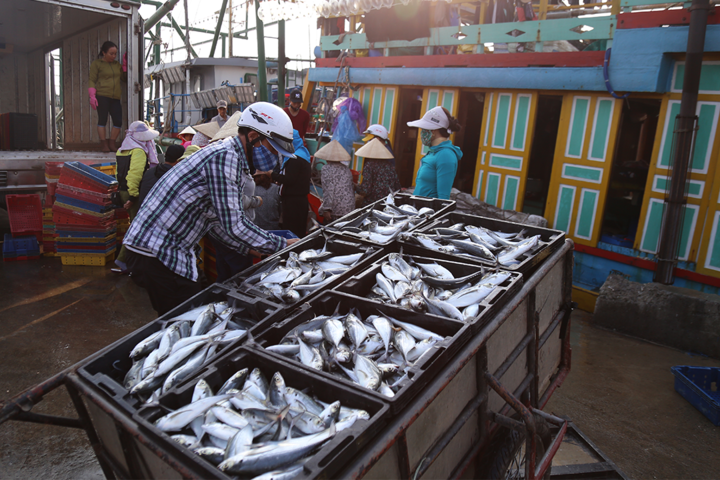 Fish is among high volume export products in Vietnam (Photo: VNE)