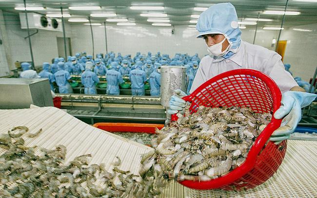 Vietnam's shrimp exports rise amidst COVID-19 pandemic