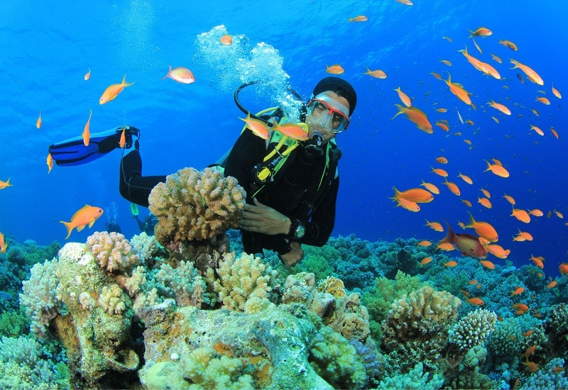 Tourists can go snorkeling to watch the amazing large coral reefs. Photo: Đất Việt Tour