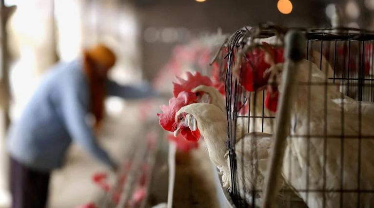five indian states confirmed bird flu cases states on alert