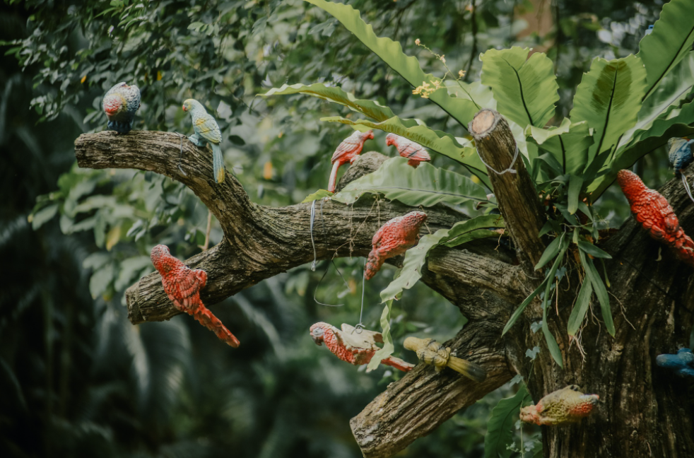 The evergreen-ness of HCMC's Zoo and Botanical Garden