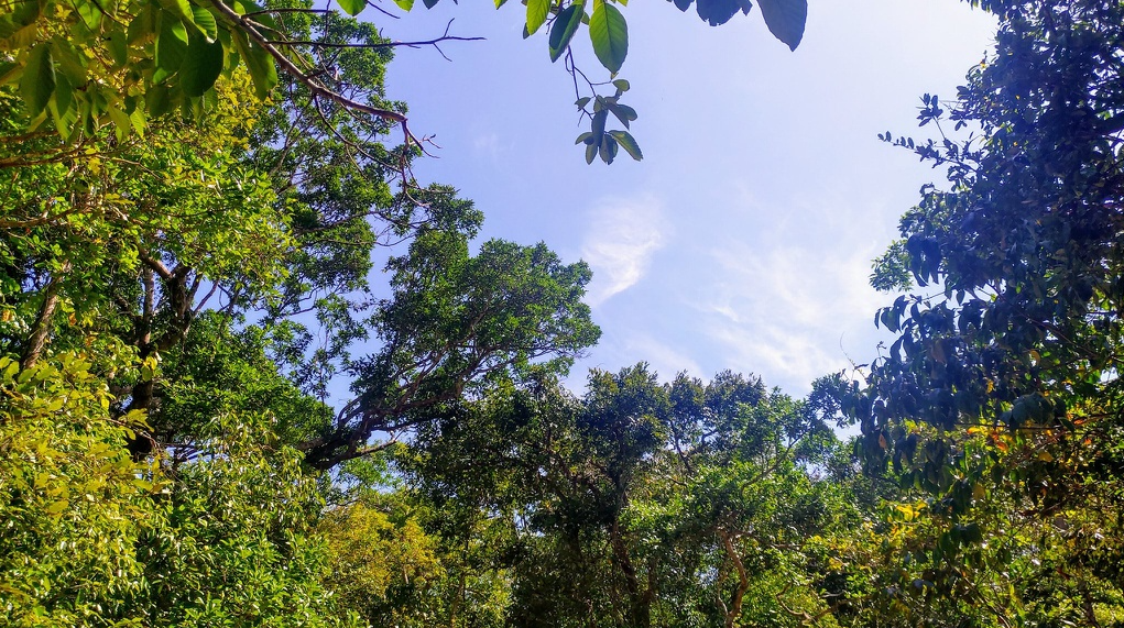 fresh experience of primary forest for tourist coming to vung tau