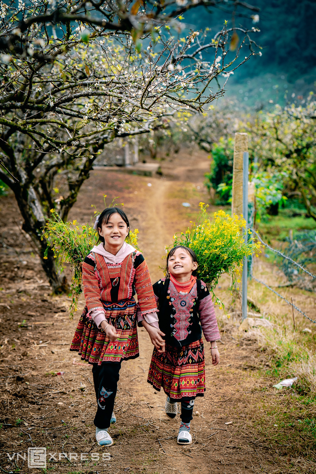 vietnam highland shines in flower season
