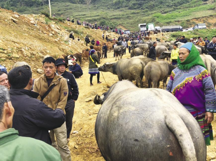 unique buffalo market in the northwest